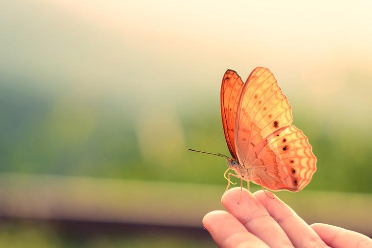 cual-es-esperanza-vida-mariposas